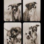 5 razones para contratar un fotomatón para perros
