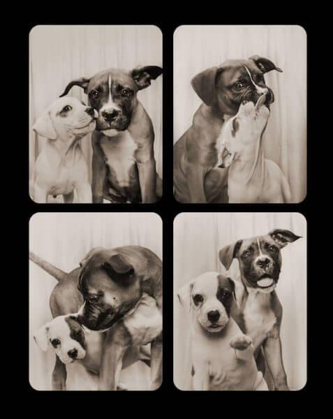 Fotomatón para perros